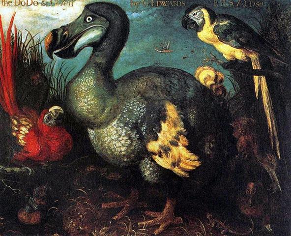 Roeland Savery's Dodo