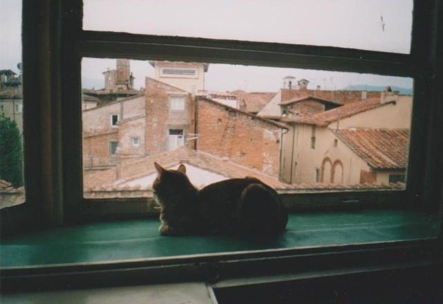 picci alla finestra