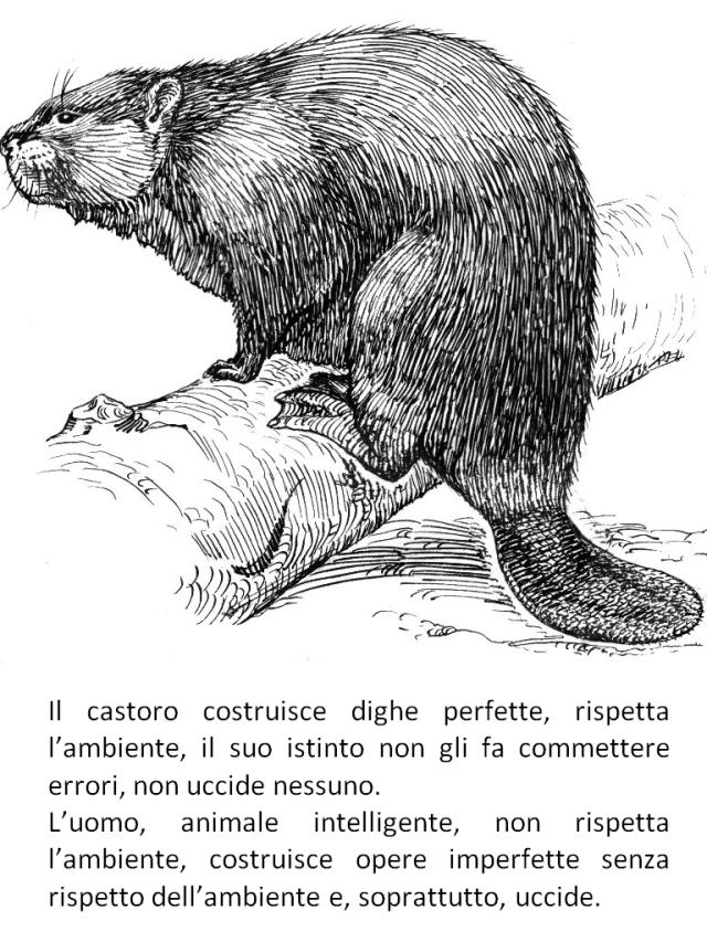 Castoro-animale